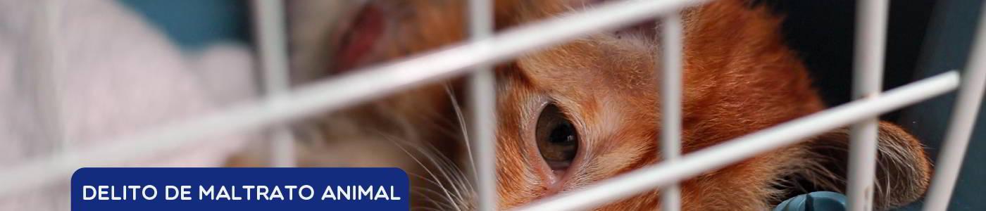 Delito de maltrato animal